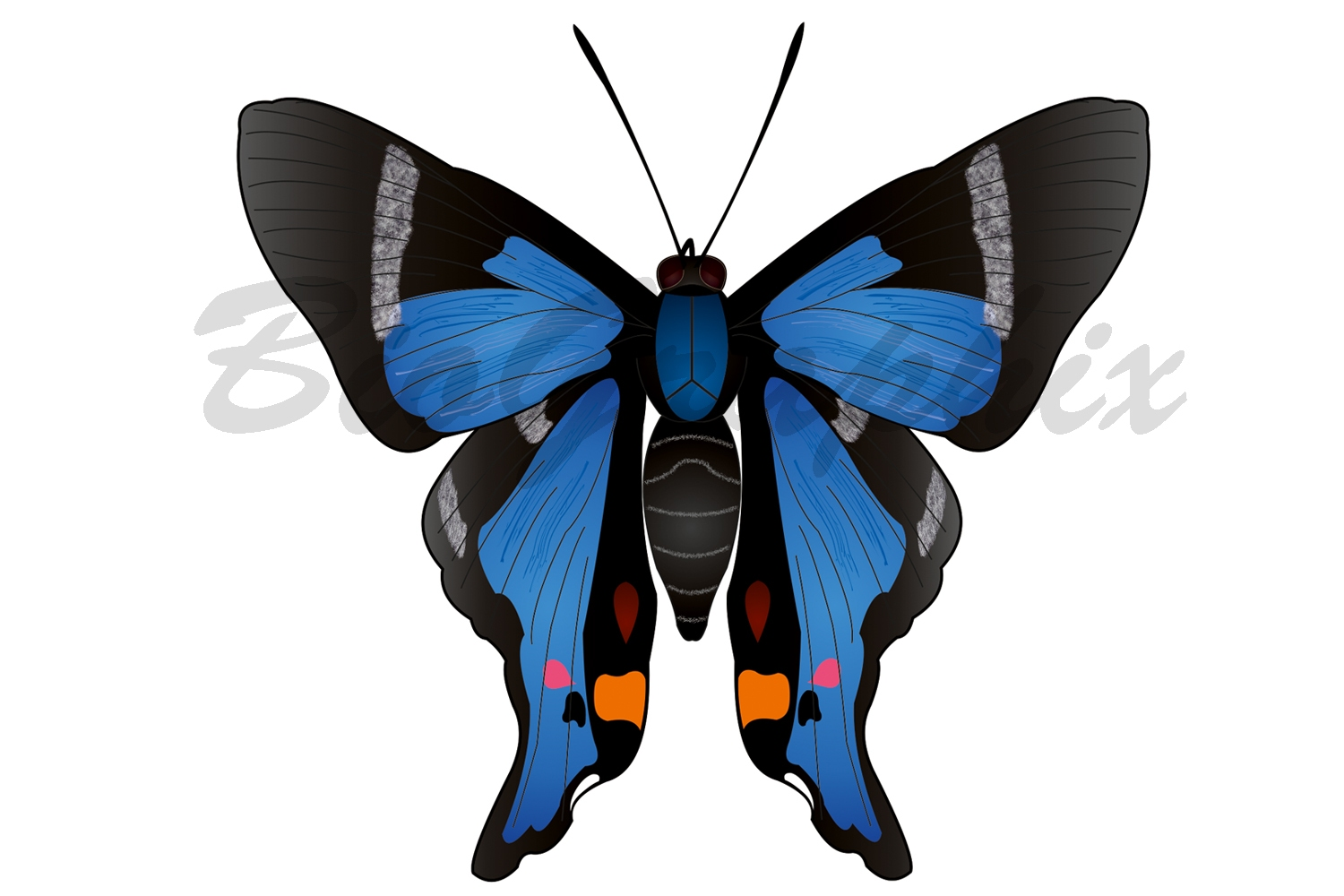 00_Animals_Butterfly