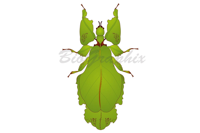 03_Animals_Stick-bug
