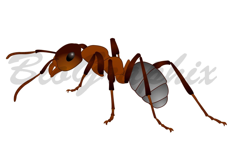 13_Animals_Ant
