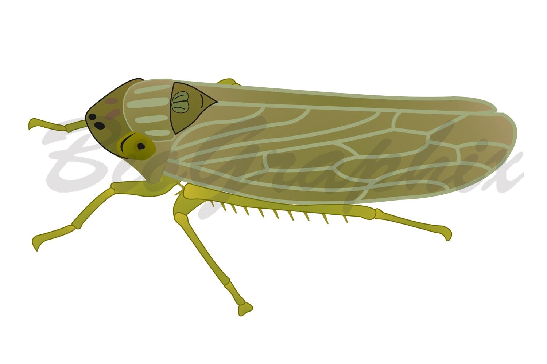 15_Animals_Leafhopper