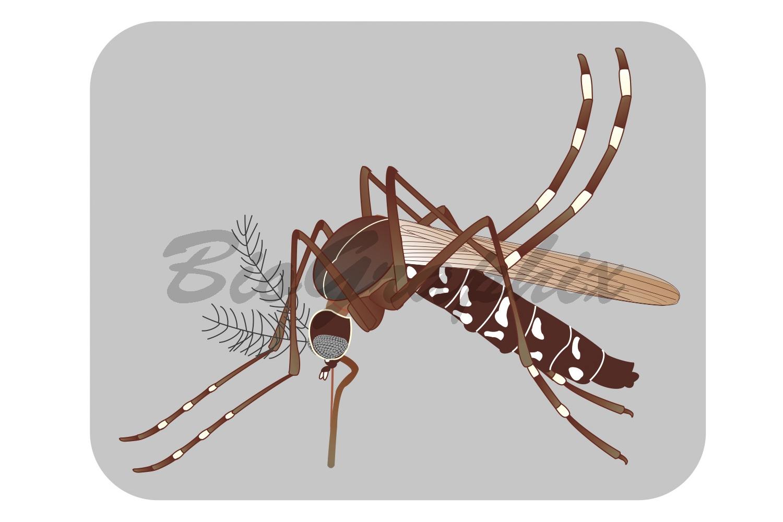 32_Animals_Aedes_background