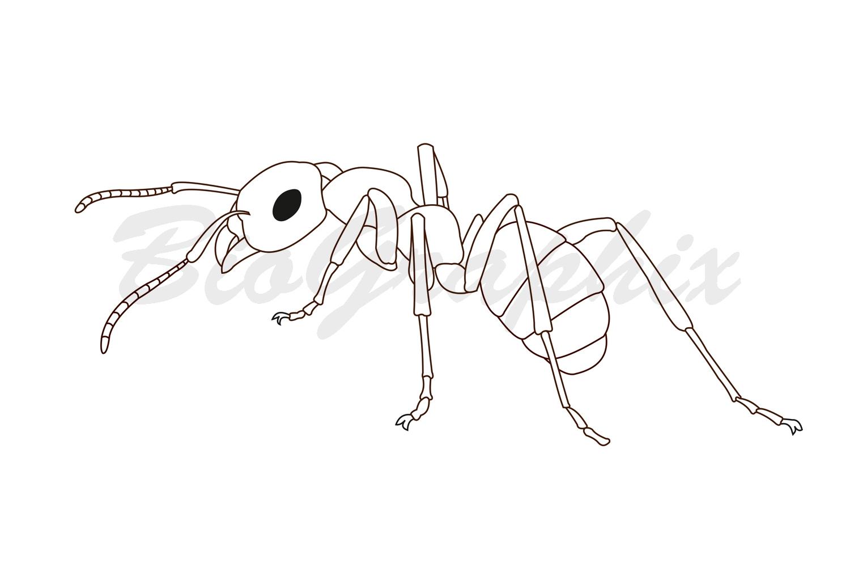 22_Animals_Ant_BW