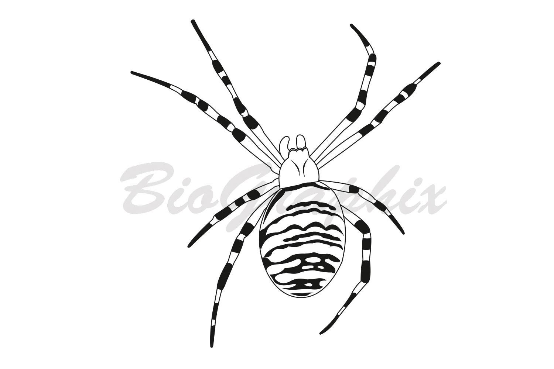 25_Animals_Spider_BW
