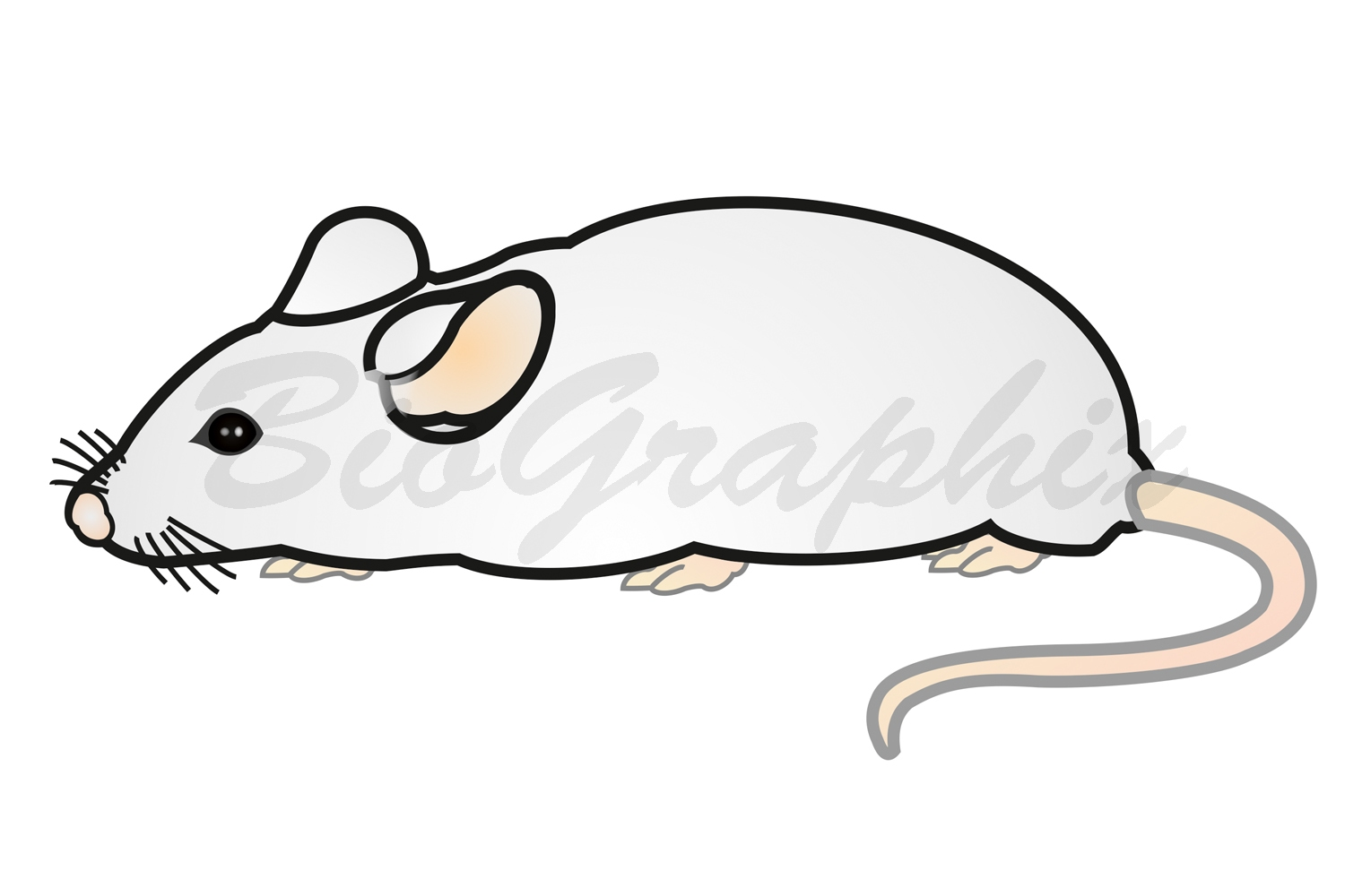 38_Animals Mouse
