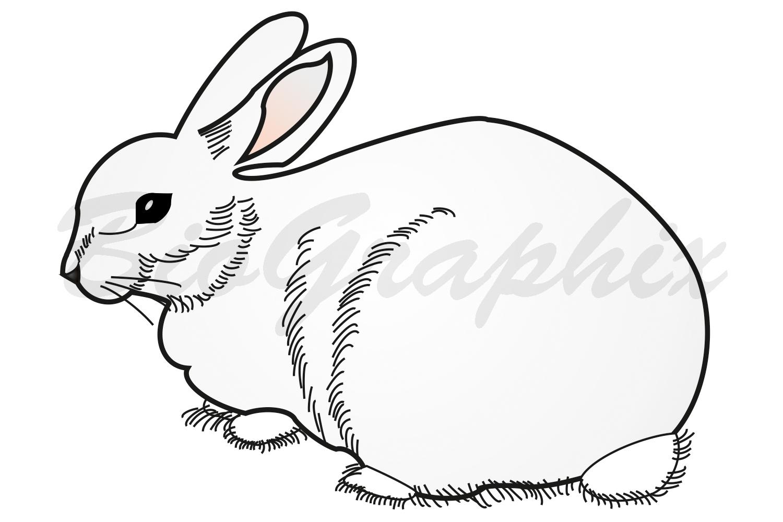 39_Animals Rabbit