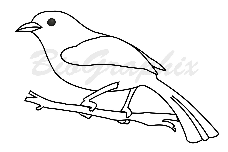 40_Animals Bird