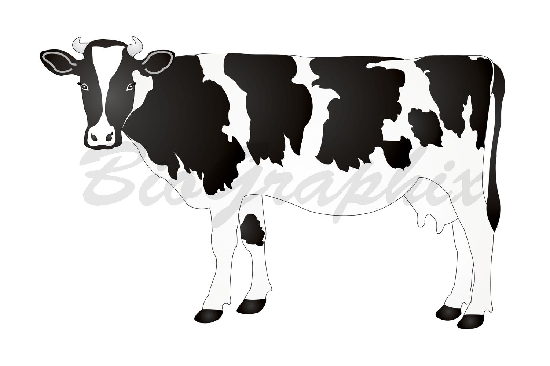 41_Animals Cow