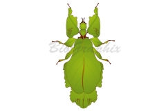 03_Animals_Stick-bug