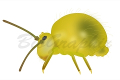 17_Animals_Springtail