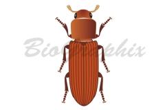 21_Animals_Tribolium-castaneum