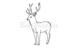 42_Animals Deer