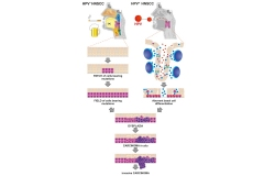 Immunological-Network-HeadNeck-Cancer-01_1000_1500_72dpi
