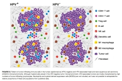 Immunological-Network-HeadNeck-Cancer-02_1000_1500_72dpi