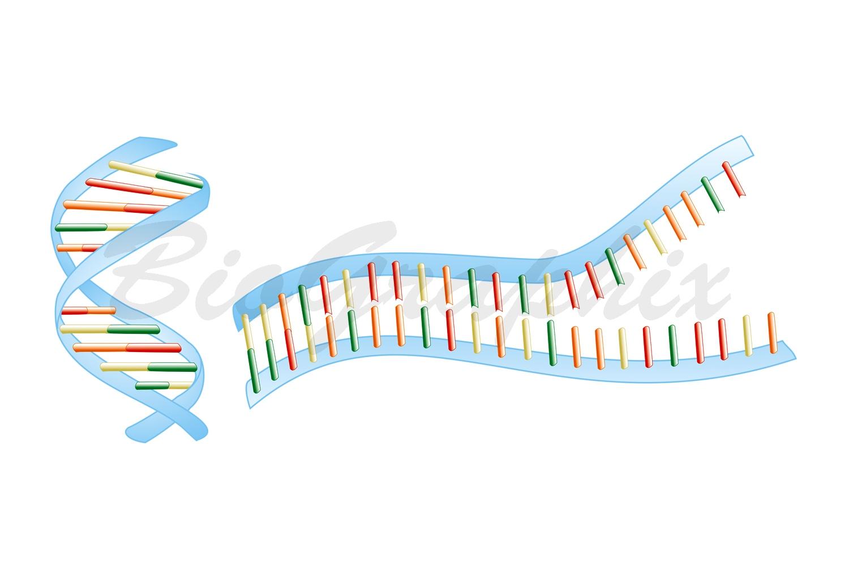 03 Molecules DNA